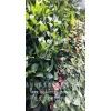 会议室垂直绿化植物-植物墙-洛阳柏霖生态农业有限公司